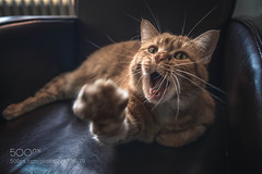 : (KevinBJensen) Tags: cat chat animal canon 6d