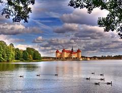Ducks in the pond of the castle (Tobi_2008) Tags: moritzburg schloss castle teich pond enten ducks himmel sky wolken clouds sachsen saxony deutschland germany allemagne germania