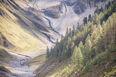 Val Trupchun (Roger_T) Tags: bündnerland canon5dmarkiv landscape landschaft nationalpark schweizernationalpark graubünden swissnationalpark wald swissmountains herbst swissalps schweiz forest 2018 mountains berge canonef70300mmf456isiiusm valtrupchun schweizeralpen canon switzerland