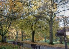 Cockington (Ray. Hines) Tags: pentaxk5ii smcpentaxda18135mmf3556edalifdcwr cockingtonvillage torbay devon autumn trees