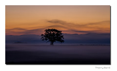 Arbre B2 Old Rt Rz Bd Sg Rd1  IMG_7395 (thierrybarre) Tags: pastel rose violet violine aube voiles brume bois silhouette