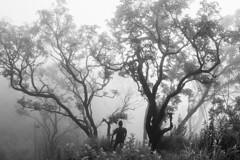 It's good to be lost (Navaneeth Kishor) Tags: travel travelling traveller wander wanderer wanderlust walk trail trails trek trekking trekker kerala westernghats keralam mist misty fog foggy silhouette bnw blackandwhite monichrome monotone