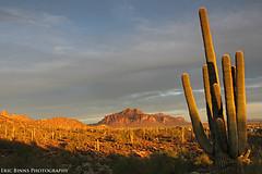 Superstition Mountain Glow (Eric Binns Photography) Tags: landscape sky clouds sunset cactus saguaro sonorandesert desert southwest arizona outside outdoors goldenhour superstitionmountain flatiron apachejunction