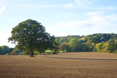 Kent Countryside (Adam Swaine) Tags: kent kentweald kentishlandscapes fields counties countryside rural ruralkent englishlandscapes english england britain british autumn autumnkent autumnviews beautiful ukcounties uk trees canon