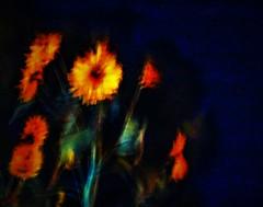 """FLORAMETAPHORICAL"" (panache2620) Tags: minneapolis minnesota eos canon creative art streetphotography flowers night metaphore negativespace vendorfruit vegetable"