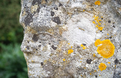 Lichen on stone 2 (S's images) Tags: west sussex dean gardens fruit kitchen garden stone statue weathered lichen