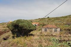 Drago y Casa / Dragon Tree & House (jojablero) Tags: casa house drago dragontree garafia agosto august lapalma canarias canaryislands