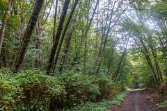 DSCF3165 (LEo Spizzirri) Tags: bicycle commute forest industry path seattle westseattlebridge westseattletrail westseattletrailfishingdock woods