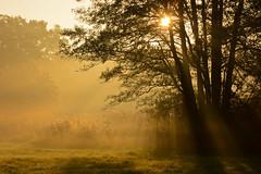 20181013-DSC_9985 (Dariusz Węcławek) Tags: river drwęca rzeka dzika wild przyroda natura landscape krajobraz polska