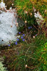 blue wildflower (johnoreillydesign) Tags: ireland wildatlanticway