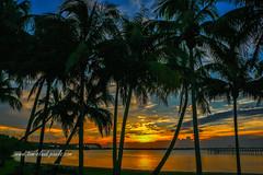Palm Tree Lagoon Sunrise (tclaud2002) Tags: sun sunrise trees palm palms palmtree palmtrees clouds cloudy sky weather landscape seascape nature mothernature river lagoon indianriver indianriverlagoon outdoors stuart florida usa tropical