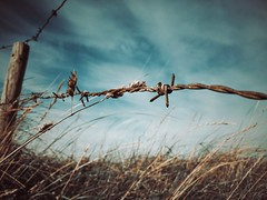 Rust & Gold (J.C. Moyer) Tags: nature flora fairytale moody mood iphonese color colour wind rusty rust golden gold clouds field pole rustic bluesky grass barbedwire