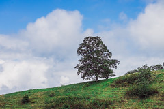 Boone, NC (ashercurri) Tags: blue ridge blueridge parkway boone nc north carolina tree landscape sony a7ii mountain mountains
