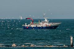 Peschereccio (frillicca) Tags: 2018 barca birds boat fishingboat gabbiani july luglio mare nikkor nikkor18300mmf35 nikon nikond300 onde peschereccio sea seagull uccelli waves