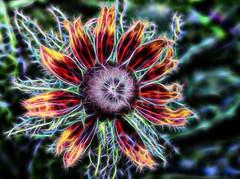 Fireflower (LotusMoon Photography) Tags: fractalius macro flower blossom manipulated bloom postprocessed texturized pattern sparkly nature annasheradon lotusmoonphotography vividcolor vibrant vivid bright digitalart decorations glow glowing