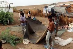 كوارث العاصفة المدارية لُبان في محافظة المهرة (nashwannews) Tags: إعصارلبان العاصفةالمداريةلُبان المهرة اليمن حضرموت سقطرى
