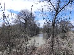DSCN9807 (Gianluigi Roda / Photographer) Tags: springtime march 2013 creeks stream water