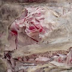 (Christelle Diawara) Tags: christellediawara rose paquetcadeau macro texture bouquet danslarue cespetitsriens travaux plastique lavieenrose