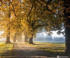 Herbstmorgen / autumnmorning (john_berg5) Tags: autumn autumncolor allee autumnleafes mornigfog sunrise bavarien