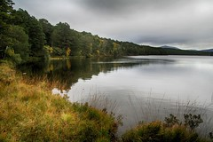 Loch an Eilein (OutdoorMonkey) Tags: loch lake water calm serene still wood woodland trees forest overcast grey cloud lochaneilein cairngorms nationalpark scotland outside outdoor rural countryside nature natural scenic scenery rothiemurchus rothiemurchusforest lochoftheisland