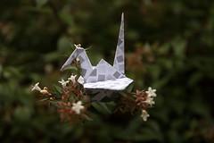 Paper Crane and Abelia x grandiflora (Eridanus 21) Tags: paper crane abelia x grandifloraツルとハナゾノツクバネウツギ アベリア flower origami craneおりがみ 折り鶴 ツル 折り紙 花 花写真ツル papercrane おりがみ 花写真 flowerphoto 花が好き