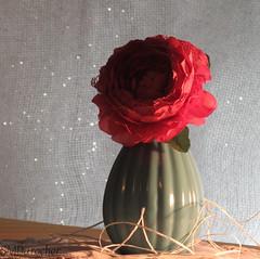 20181008 SideLit Vase2 c (SMD Pics) Tags: wtc sidelit vase flower pînk aqua