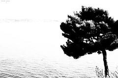 Japanese Silhouette (xjouve) Tags: tree sea minimalism bw