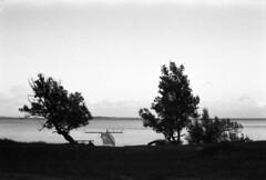 Aftensilhuetter (holtelars) Tags: asahi pentax spotmatic sp m42 supertakumar takumar 50mm f14 film 35mm analog analogue ilford fp4 ilfordfp4 100iso d76 bw blackandwhite monochrome filmphotography filmforever ishootfilm larsholte homeprocessing jobo atl1500 sletten strand beach denmark danmark tree seascape