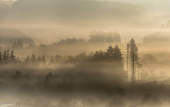 10102018-DSC_0124 (vidjanma) Tags: bw brume arbres silhouettes matin ambiance