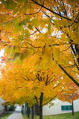 Green Bay Fall Colors-12