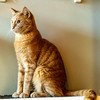 Javacats14Oct2018197.jpg