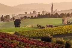 Poetic atmospheres (Luca Nacchio) Tags: autunno foglie foglia colori castelvetro modena autumn leaves leaf colors paesaggio paesaggi beautiful landscape hills