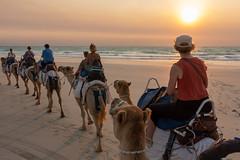 10003444.jpg (KevinAirs) Tags: camels kevinairs ocean camel travel westernaustralia ©kevinairswwwkaozcomau sand sky landscape landscapes beach australia sea jacquihawkins