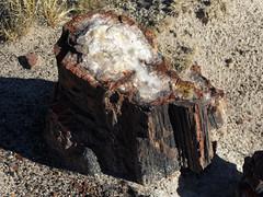Crystal Forest Trail (Zruda) Tags: arizona geo:lat=3486617368 geo:lon=10978844782 geotagged headquarters petrifiedforestnatlpk unitedstates usa