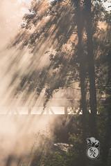 Sun and mist (Storm'sEndPhoto) Tags: crisp mist fog mysterious sun aamu summuinen summu tree lightrays rays leaves bridge pori satakunta noormarkku noormarkunruukki ruukki suomi finland syksy aamuvalo morninglight autumn fall season