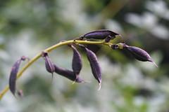 DSC09449 (Old Lenses New Camera) Tags: sony a7r pentax 100mm f28 macro plants garden smcpentaxfa