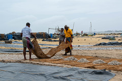 Fishermen drying fishes (licourclara) Tags: fishermen fishes dry fish market srilanka negombo travel asia roadtrip nikon d5300