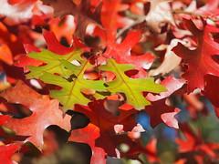 3 (1elf12) Tags: laub foliage herbst autumn germany deutschland braunschweig melverode