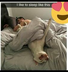 i like to sleep like this (sivappa.technology) Tags: like sleep this httpcrazytrendzoneblogspotcom201810iliketosleeplikethis17html thisi thisdailyhahacom funny pictures httpsifttt2ciozuhhttpsifttt2a9paahvia blogger httpsifttt2rp2jpjoctober 15 2018 0638amvia httpsifttt2cfgf2eoctober 0749amvia httpsifttt2qre91koctober 1049amvia httpsifttt2en73jooctober 0149pmvia httpsifttt2ckhtiboctober 0449pm httpwwwdailyhahacompicsiliketosleeplikethisjpg october 0749pm
