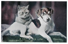 Postcard Cats 2004  ill pg 144 (janwillemsen) Tags: cat dog bookillustration oldpostcard handcouloured