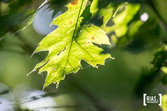 """Rias.Photography_30_september_2018_1234 • <a style=""""font-size:0.8em;"""" href=""""http://www.flickr.com/photos/164301253@N02/31515892508/"""" target=""""_blank"""">View on Flickr</a>"""