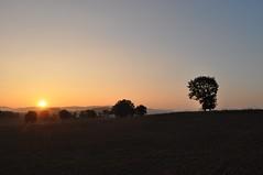 Die Sonne geht auf (Uli He - Fotofee) Tags: ulrike ulrikehe uli ulihe ulrikehergert hergert nikon nikond90 fotofee morgen sonnenaufgang morgennebel frühstück baum licht nebel haune