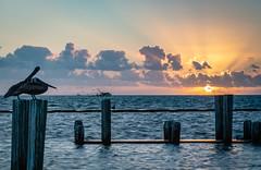 Early Morning Shrimping (Jims_photos) Tags: fultontexas fultonharbor water texas unitedstates adobelightroom adobephotoshop shadows sunnyday sunrise shrimpboat daytime docks fishingboat jimallen jimsphotos jimsphotoswimberleytexas lightroom tx texascoast cloudy clouds coastalscene nopeople nikond750 morninglight