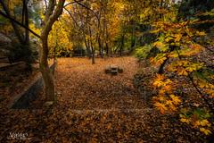 Lugares que enamoran (Valero-Xixona) Tags: oscuridad otoño montaña valero hojas canon colores