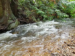 The creek rushes by (walneylad) Tags: princesspark northvancouver britishcolumbia canada park parkland urbanpark woods woodland forest urbanforest rainforest trees logs moss ferns rock trail creek water falls september fall autumn afternoon dark wet rain clouds brown green white view scenery nature