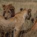 Safari Flickr (197 of 266)