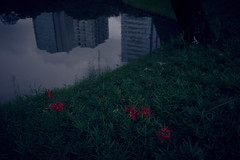 彼岸此岸 (ryo_ro) Tags: a7 ilce7 sony loxia zeiss carlzeiss 35mm f2