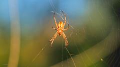 Puzzled (VGPhotoz) Tags: vgphotoz puzzle nature artphotography usa naturalworld wildlife web veb spinne araña ragno pók spin păianjen voras sekho buibui caaro webserviceprovider webmaster