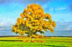 October: Oak Tree (Kalev Vask.) Tags: digital kalevvask postprocessed photomanipulation digiart photoart painterly artistic creative estonia autumn manipulated ownphoto phototopainting topazstudio 2018 mediachance dap tree colorful oak