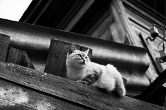 Somewhere in the suburbs (_storysofar_) Tags: streetphotography streetportrait portrait animals cat roof house building blackandwhite monochrome tver russia fujifilm